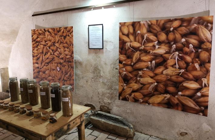 Galerie Sladovna Žatec, Žatec, Bier in Tschechien, Bier vor Ort, Bierreisen, Craft Beer, Brauereimuseum, Mälzerei